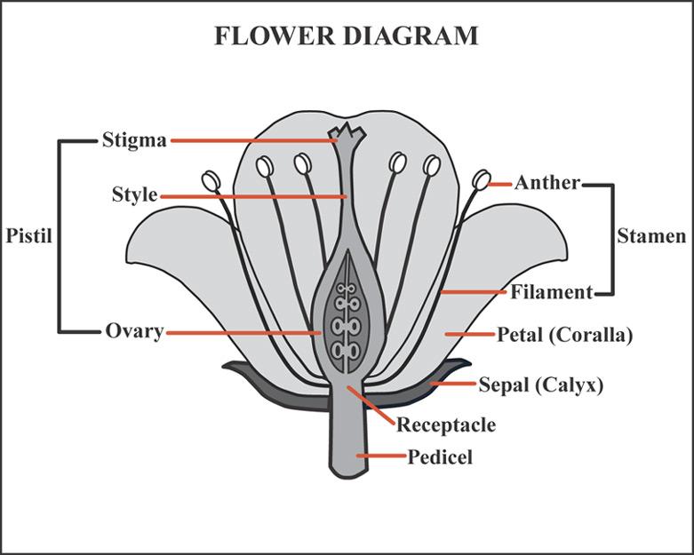 Saving seed seedstewards flowerdiagram flower diagram ccuart Images